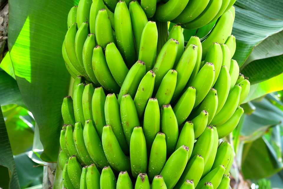 la dieta del plátano paso a paso
